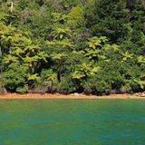 Native bush in New Zealand. Scene in the Marlborough Sounds, South Island Stock Image