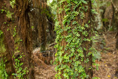 Native bush of New Zealand. On the way to Cathedral Cave Royalty Free Stock Photo