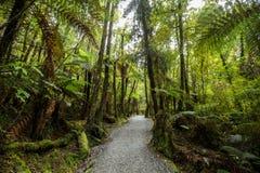 Native bush of New Zealand Royalty Free Stock Photography