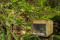 Native Bush Pest Control. New Zealand has many of these pest traps in it native bush to help control pest like the rat Royalty Free Stock Photography