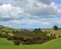 Native Bush on Waiheke Island, Auckland, New Zealand. Vertical panoramic view of Native Bush and stormy sky at Stony Batter on Waiheke Island, Auckland, New Stock Image