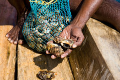 Native diver show seashell catch. In Indian ocean, Kerala, India stock image