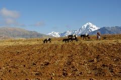 Native female farmer with donkeys, Peru stock photos