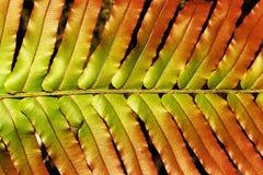 Native fern stock image