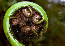 Native ferns Stock Photo