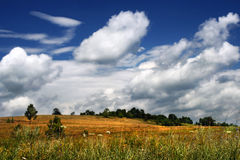 Native fields. Ukraine. A landscape of the Poltava territory Royalty Free Stock Image