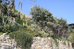 Native Garden Stock Images