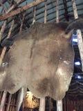 Native Indian Buffalo skin. Buffalo skin fur pelt native Indian Royalty Free Stock Image