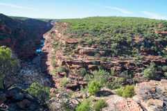Native Kalbarri: Z-Bend. Stunning scenic view of the sandstone bluffs in the Z-bend gorge's vast landscape in Kalbarri National Park with native green flora Royalty Free Stock Photos