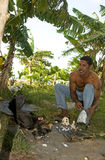 Native man feeding chickens coconut Royalty Free Stock Photo