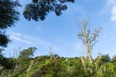 Native New Zealand bush on side of Mount Maunganui Stock Images