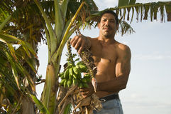 Native Nicaragua man with banana plantains Royalty Free Stock Photo