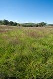 Native Pasture Stock Image