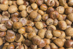 Native raw chestnut Royalty Free Stock Images