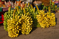 Native Thai dainty  banana Stock Image