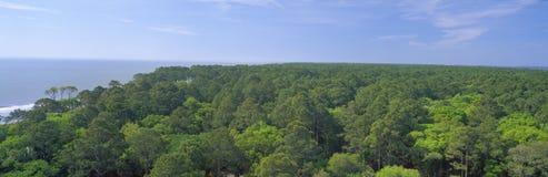 Native trees at Hunter Island. Near Hilton Head, South Carolina Stock Photos
