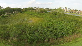 Native vegetation in Florida stock video