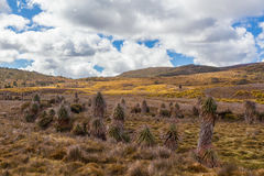 Native vegetation on highland plains at Cradle Mountain National Royalty Free Stock Images