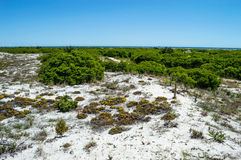 Native Vegetation Long Beach Island Stock Photo