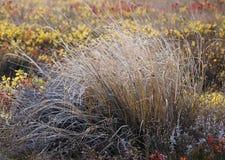 Native Wild Grasses Royalty Free Stock Photo