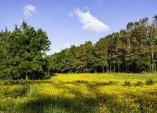 Free Native Wildflower Field In North Carolina Stock Image - 167176151
