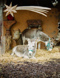 Nativity scene and two donkeys Stock Photos