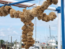 Natral sponges drying in a cross shape. Photo image of natural sponges drying out on ropes in a cross shape at the sponge docks in Tarpon Springs Florida Stock Photo