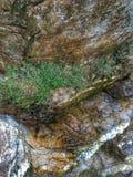 Natürliche Vegetation Stockbild