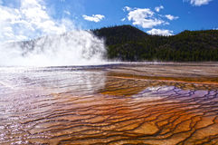 Yellowstone Nationalpark, Wyoming, Vereinigte Staaten Stockbilder