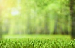 Natürlicher grüner Waldhintergrund Stockfotos