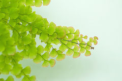 Natrual green with soft focus background. Green leaf with soft focus background Royalty Free Stock Photos