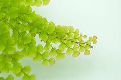 Natrual zieleń z miękkim ostrości tłem Zdjęcia Royalty Free