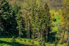 Natsionalny botanisk trädgård, M M Grishka nationell akademi av vetenskaper av Ukraina Royaltyfri Bild