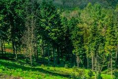 Natsionalny botanisk trädgård, M M Grishka nationell akademi av vetenskaper av Ukraina Arkivfoton