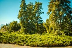Natsionalny botanisk trädgård, M M Grishka nationell akademi av vetenskaper av Ukraina Royaltyfri Foto
