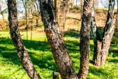 Natsionalny botanisk trädgård, M M Grishka nationell akademi av vetenskaper av Ukraina Royaltyfria Foton