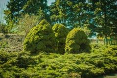 Natsionalny botanisk trädgård, M M Grishka nationell akademi av vetenskaper av Ukraina Royaltyfri Fotografi
