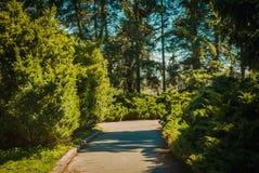 Natsionalny botanisk trädgård, M M Grishka nationell akademi av vetenskaper av Ukraina Fotografering för Bildbyråer
