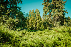 Natsionalny botanisk trädgård, M M Grishka nationell akademi av vetenskaper av Ukraina Arkivbilder