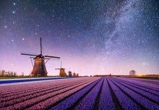 Natt över fält av påskliljor Fantastisk stjärnklar himmel och den mjölkaktiga vägen royaltyfria bilder