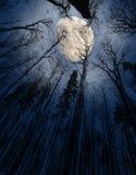 natt royaltyfri fotografi