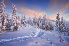 natt för julliggandemagi Fotografering för Bildbyråer