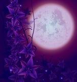 Natt flowers02 Arkivbild