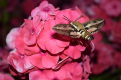 Natt-fluga i trädgården arkivfoton