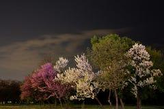 Natt i parken Arkivfoton