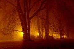 Natt i parkera. Royaltyfri Bild