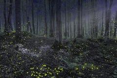 Natt i skogen i Michigan arkivbilder