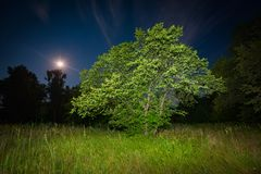 Natt i stäpp Arkivfoto