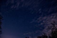 Natt mycket av stjärnor bak träden Royaltyfria Bilder