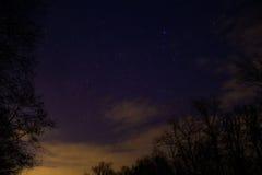 Natt mycket av stjärnor bak träden Arkivbild